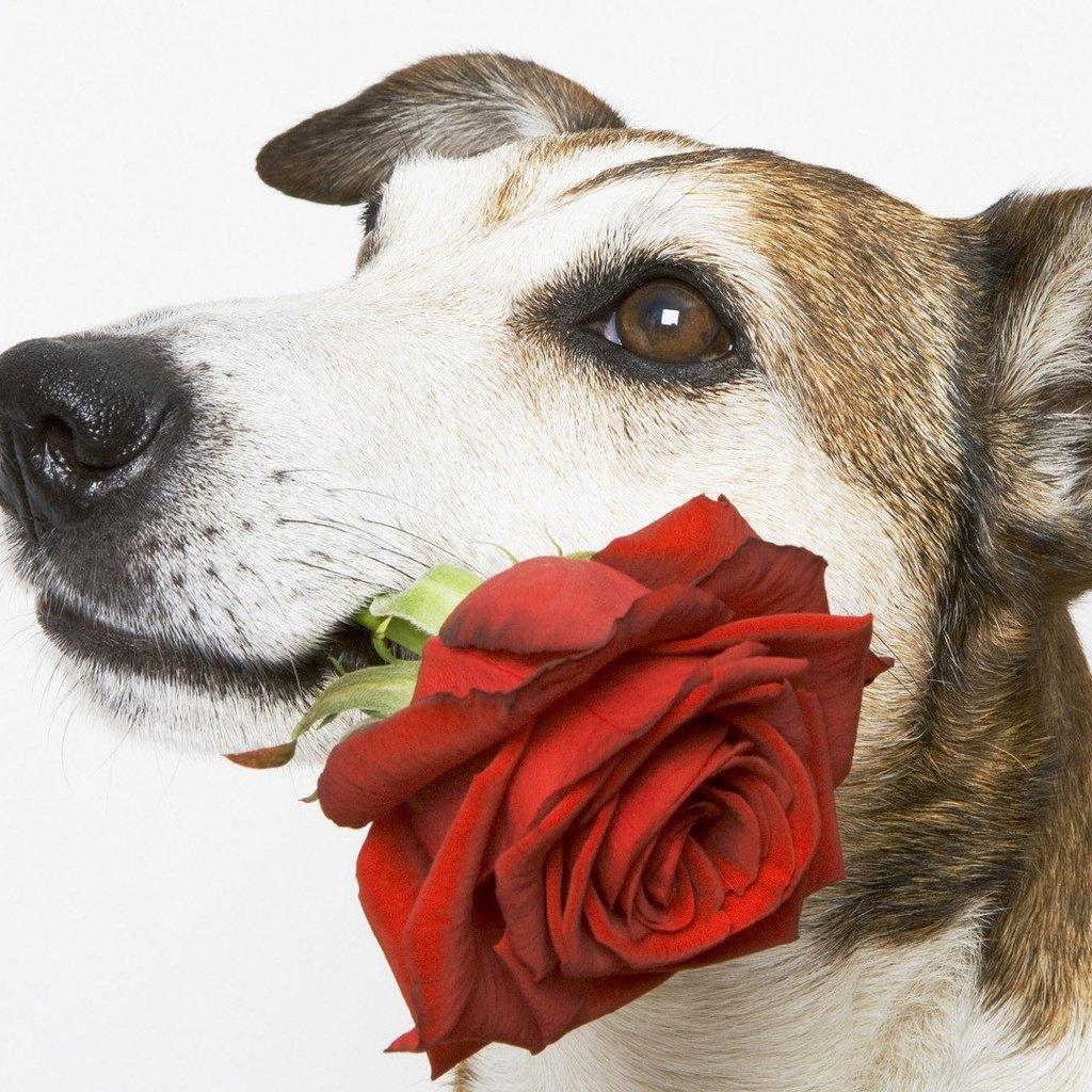 Открытки год, открытка на день рождения женщине с собаками
