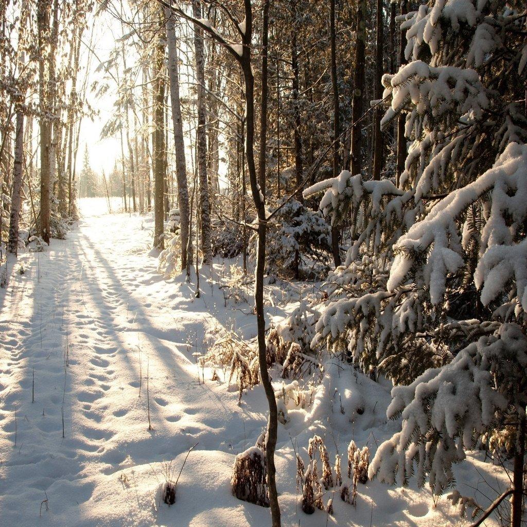 позволяют картинки зимний снежный коми лес коллекции подвесных унитазов