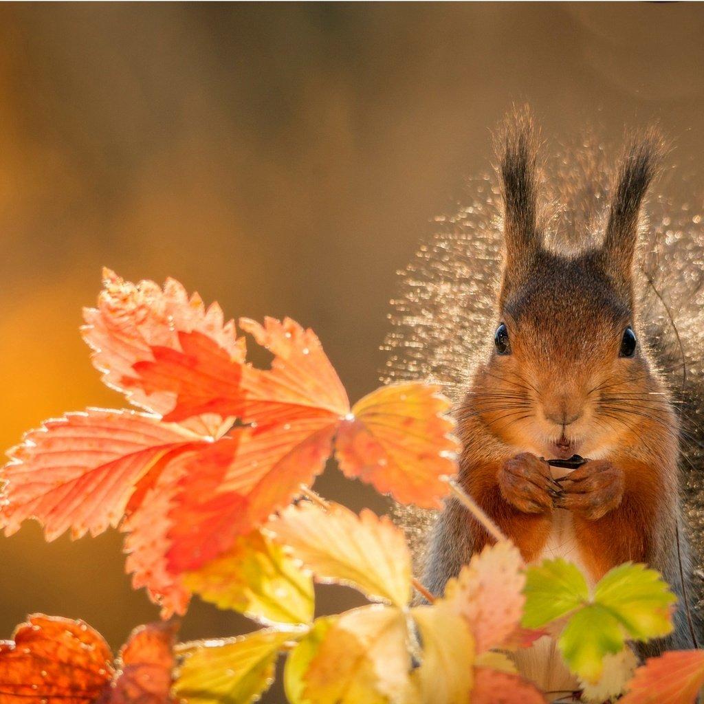 картинки про осень и животных