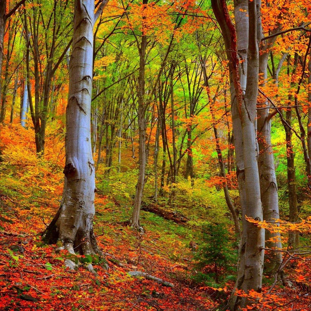 Обои leaves, trees, autumn. Природа foto 18