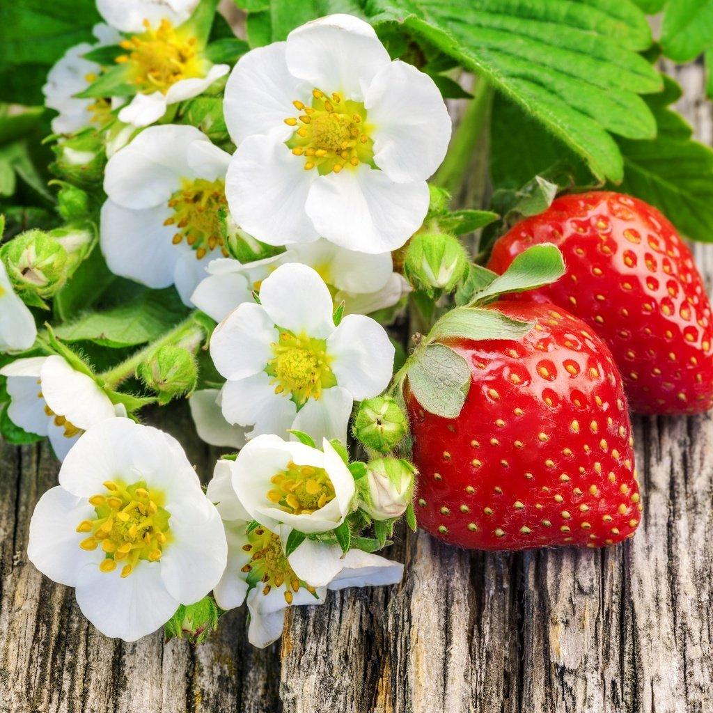 ягоды и цветы картинки езжу