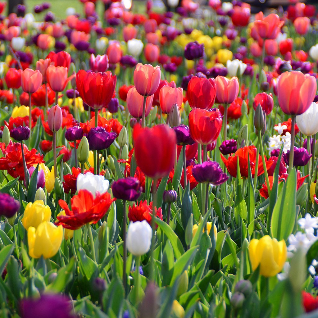 Весна тюльпаны фото