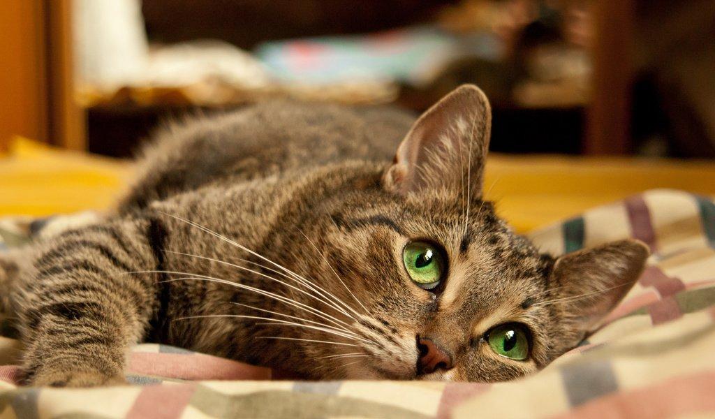 мало кошки с зелеными глазами фото дома