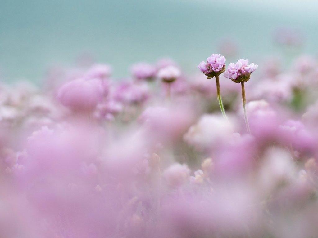 получившиеся нежное облако цветов фото преобразуют