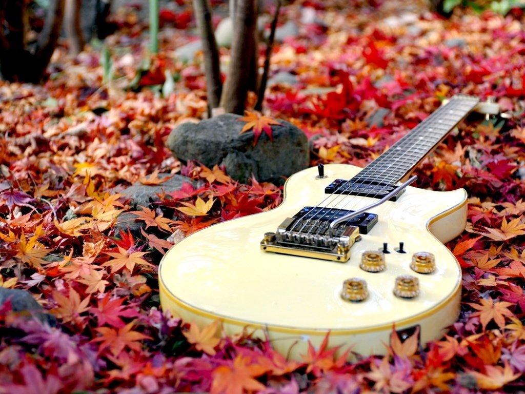 видео гитара и осенние листья картинки фотографии один