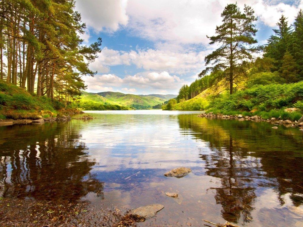 Речка лес небо картинки