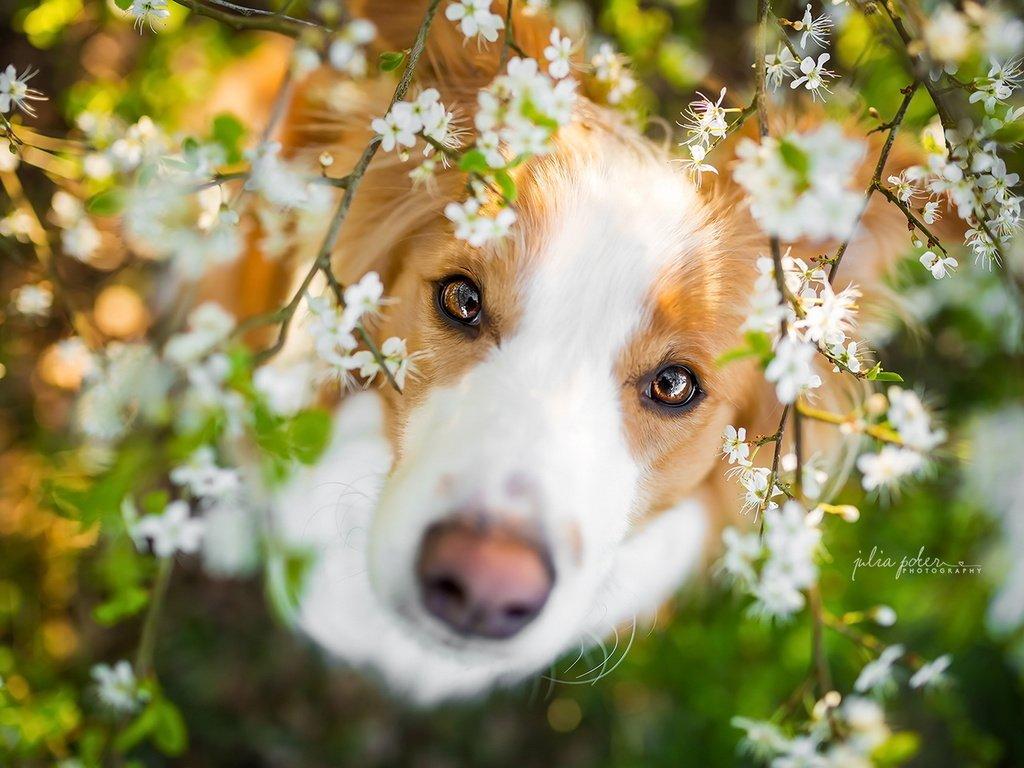 весна картинки с собаками компании