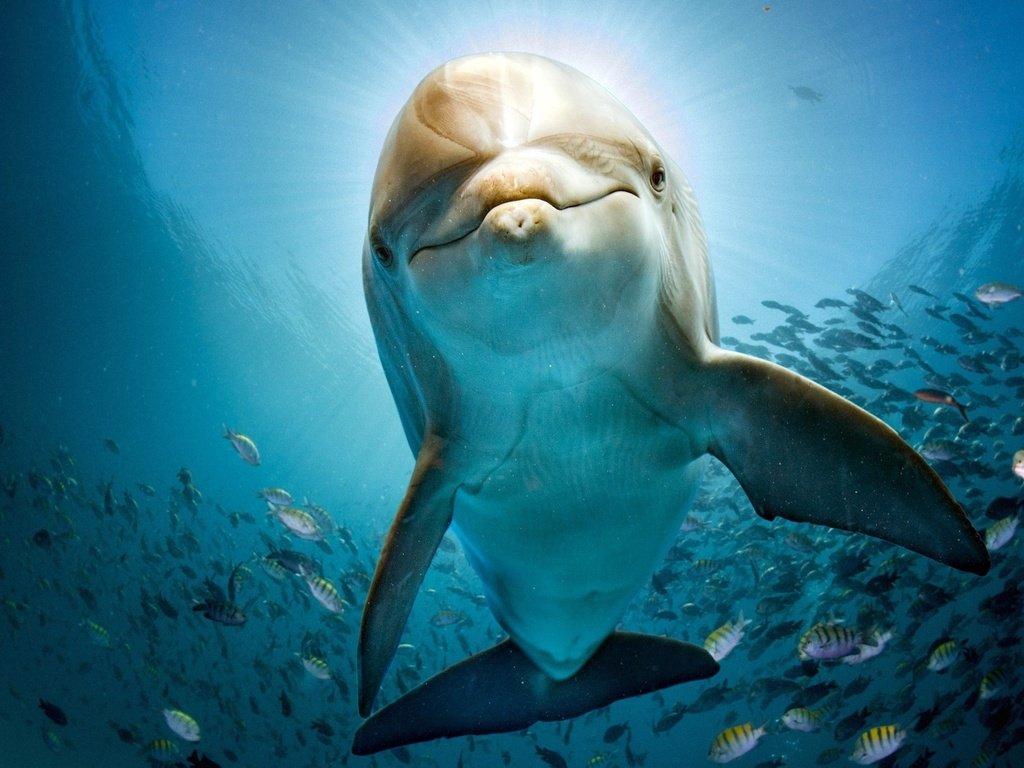 песочные картинки рыбки и дельфин где большой праздник