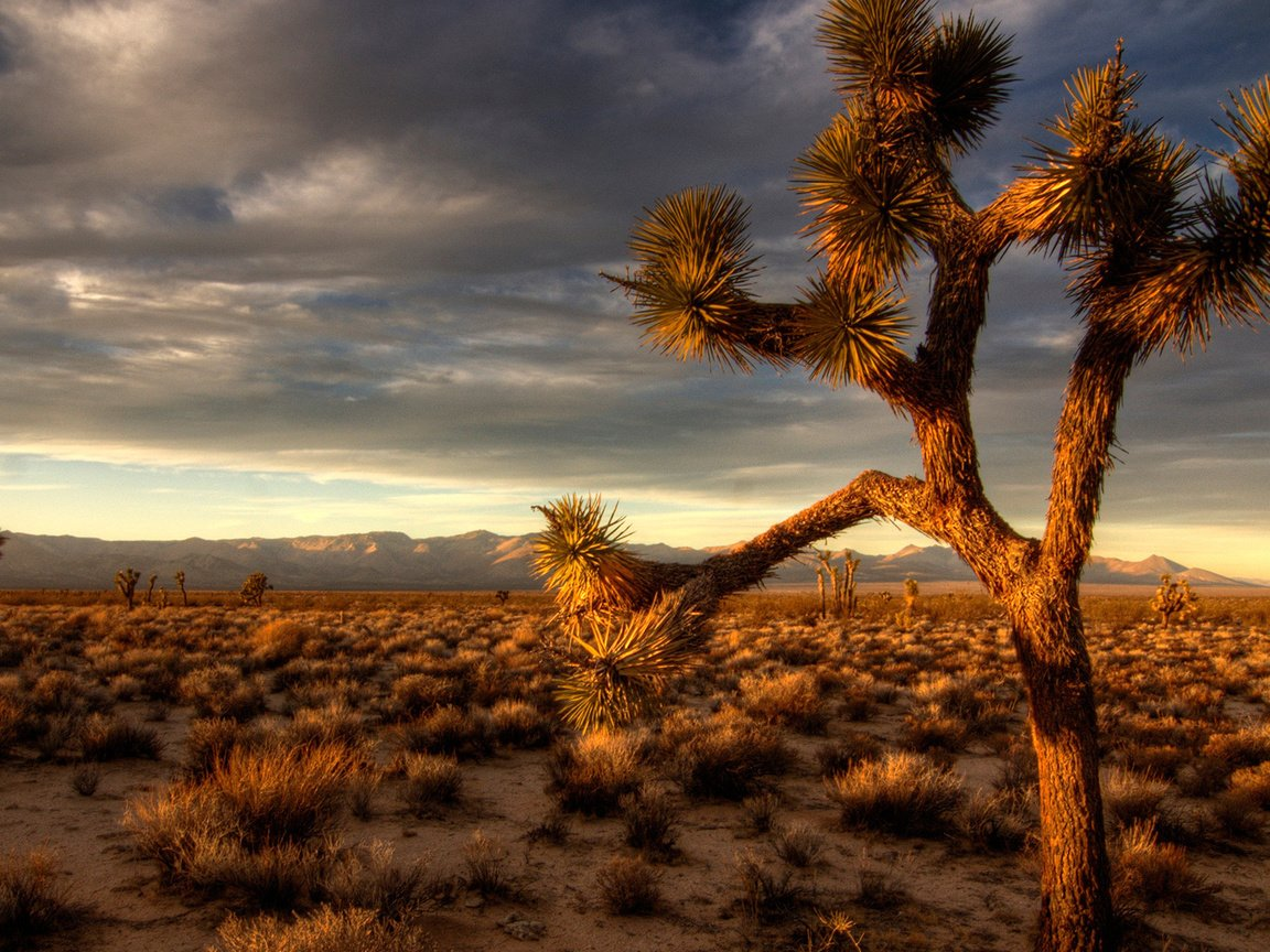 природа пустыня солнце  № 948805 загрузить