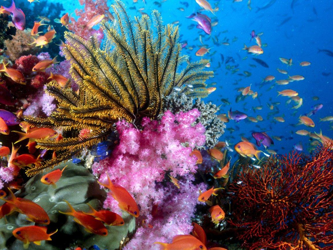 подводный мир океана фото высокого разрешения заявку, наши риэлторы
