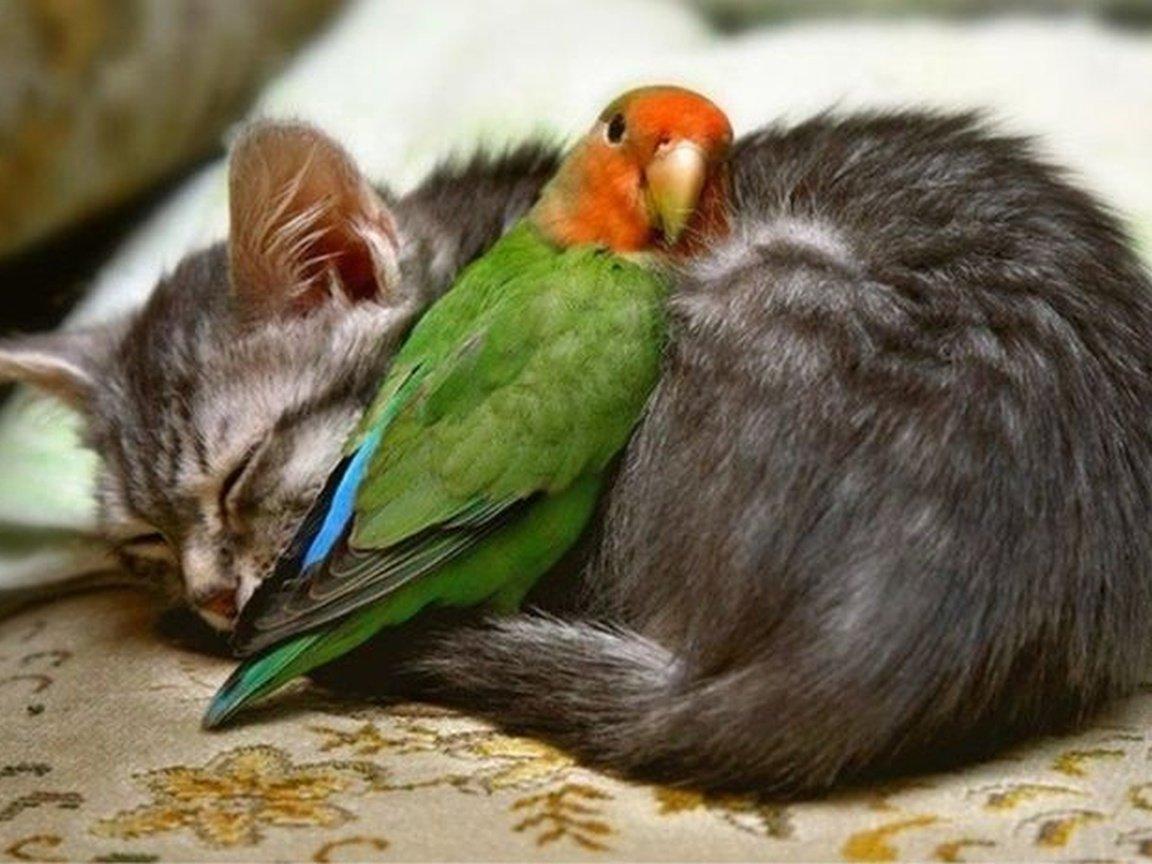 Любят друг друга приколы картинки