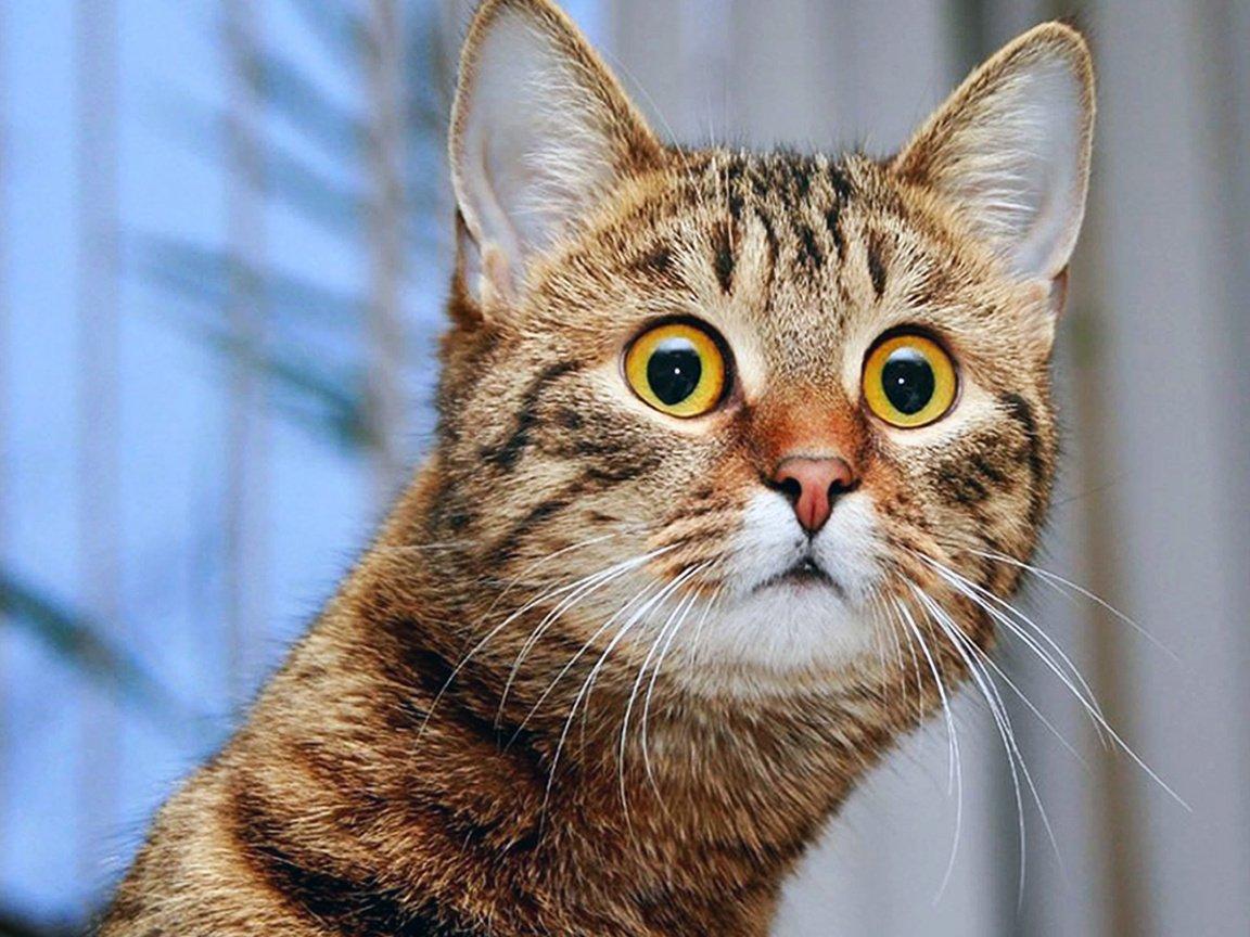 Фото редкий пиздун, Редкое фото Пикабу 28 фотография