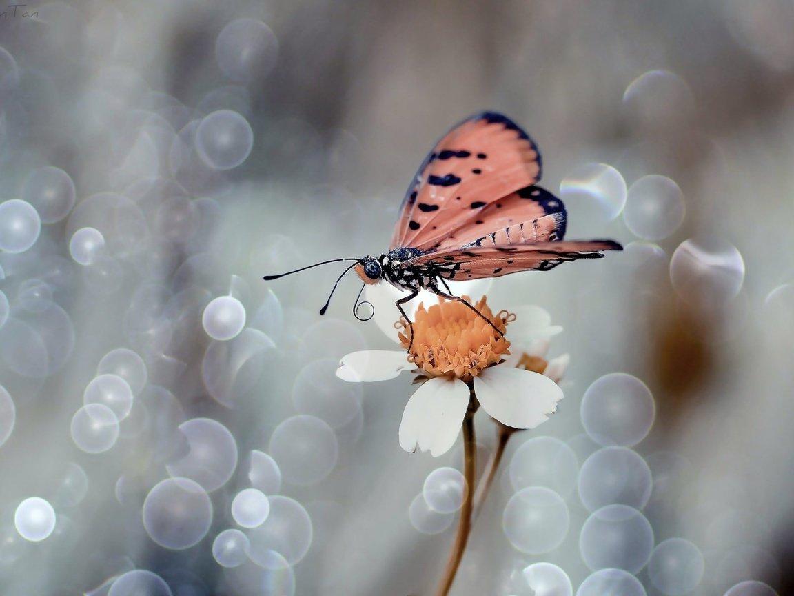 как сфотографировать цветок макро шедевром подборка которой