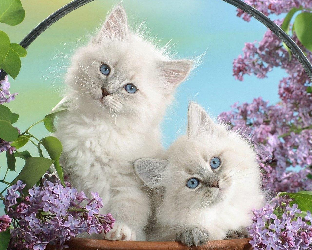 Летием свадьбы, открытки котята маленькие