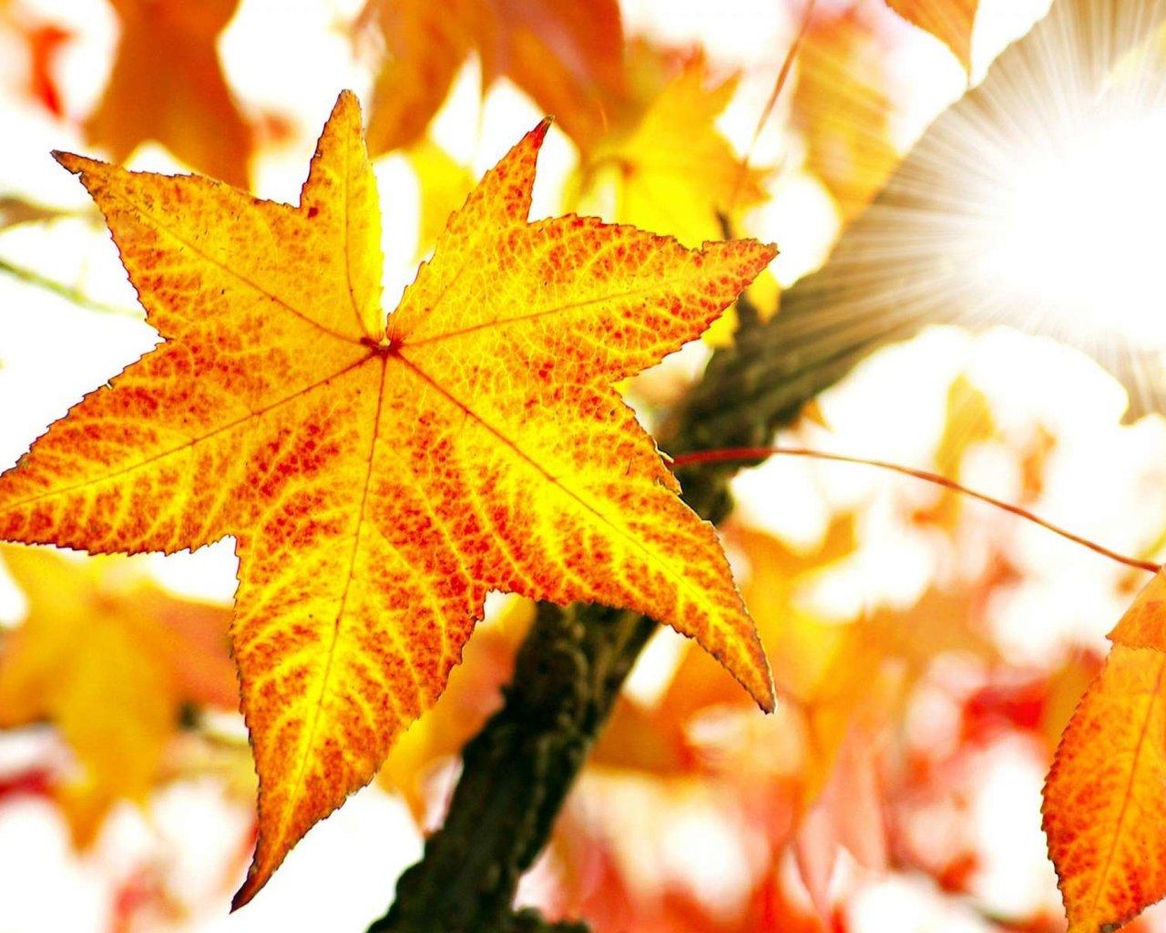 можно картинки осень листья большие наталья орейро картинки