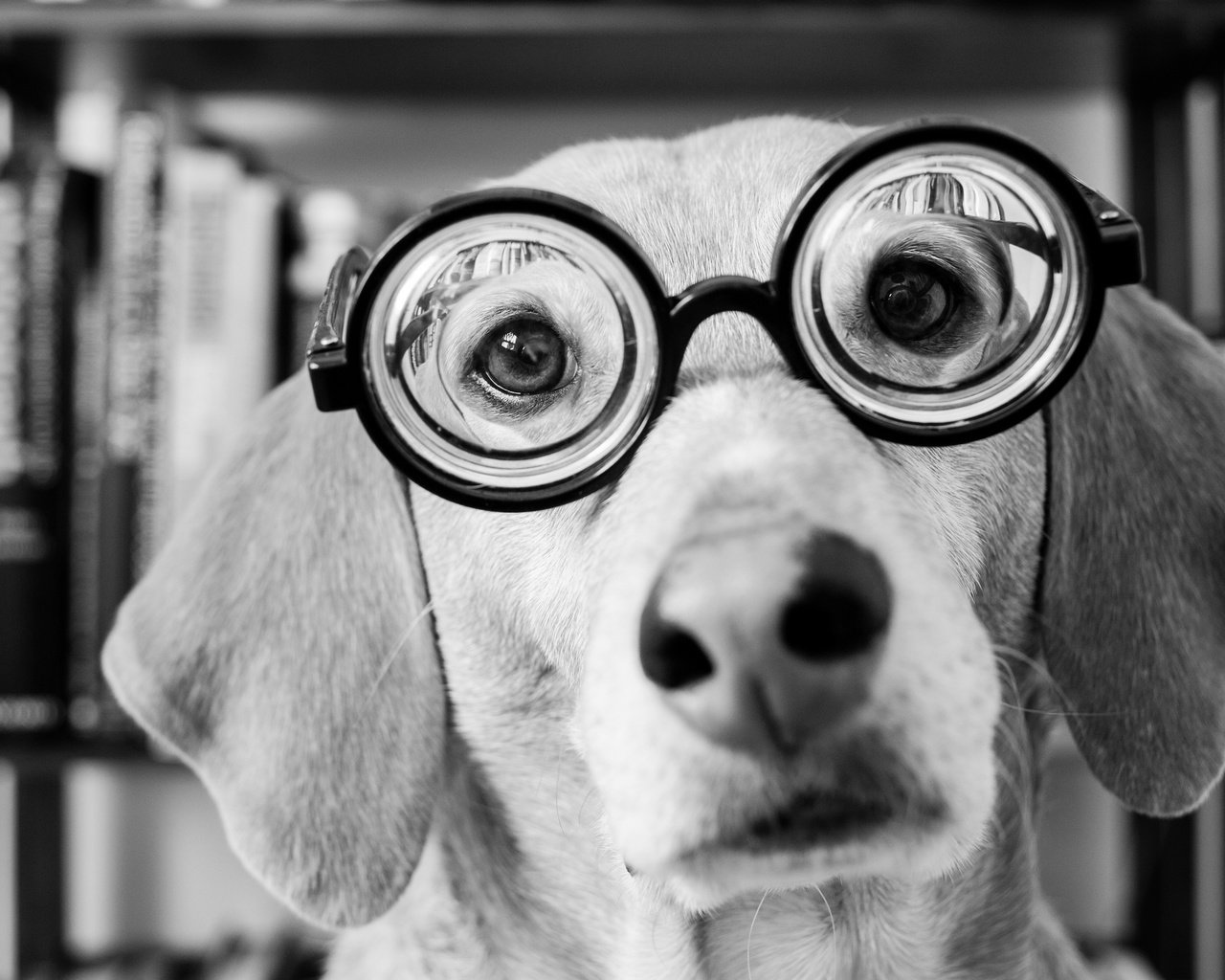 dog with glasses - HD1280×1024