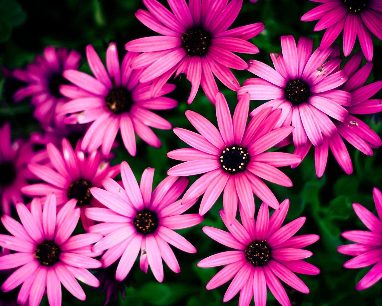 Цветочки картинки