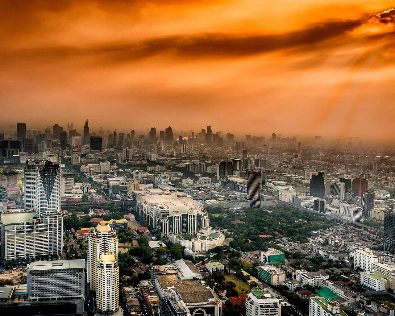 лес грибы бангкок фото города обои для айфона волгограде
