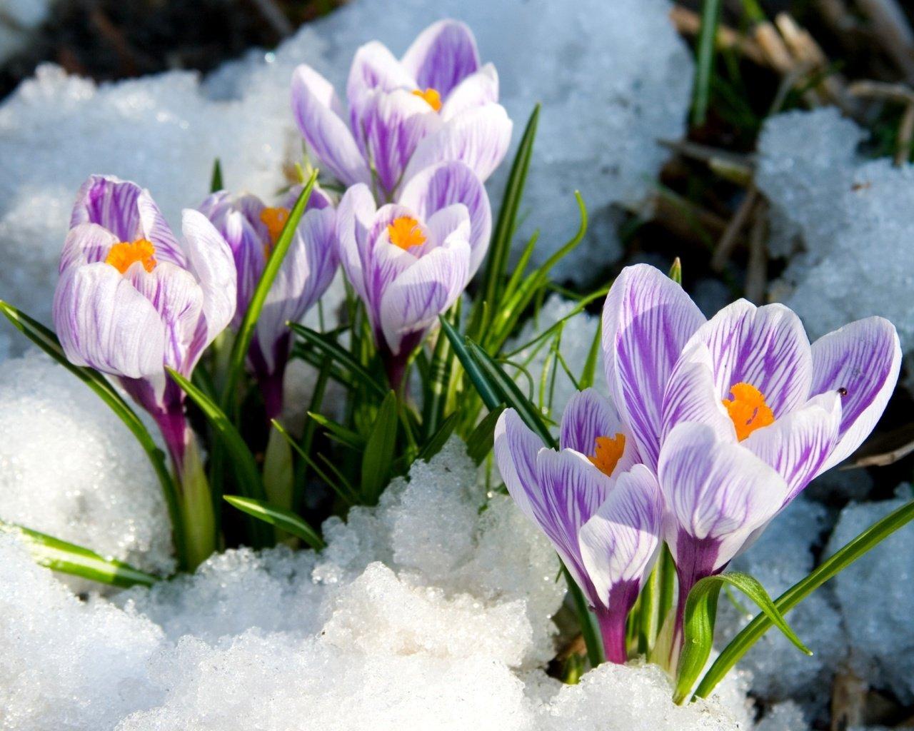 Весна снег картинки