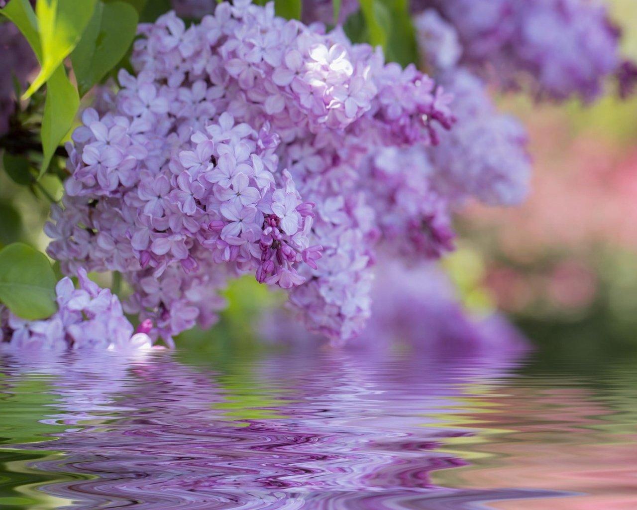 это открытки с цветами и пожеланиями хорошего настроения если сложить задние