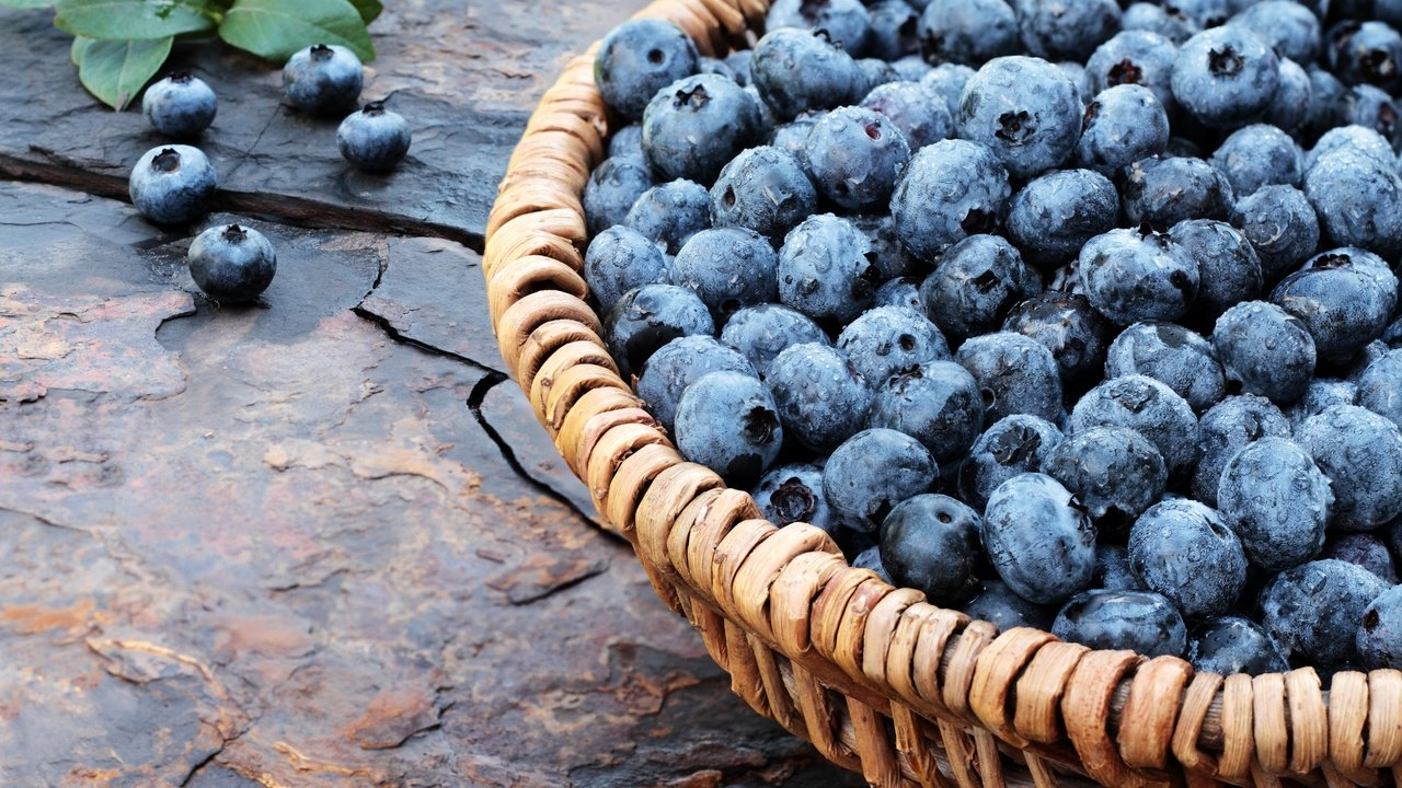 Обои черника, wood, berries, голубика, Blueberry. Еда foto 16