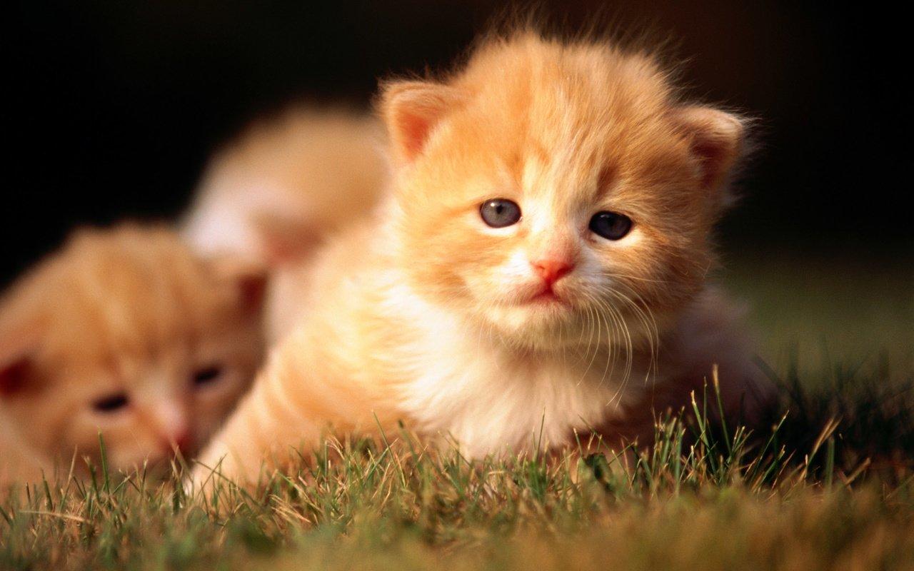 Рыжий котенок  № 1144291 загрузить