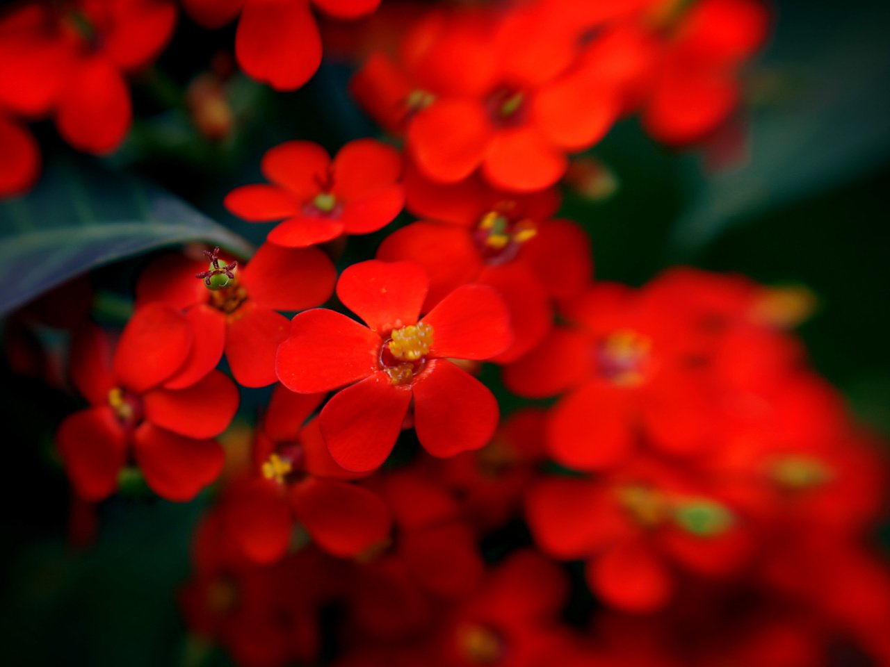 красные только красные цветы фото кровообращение, аппликатор