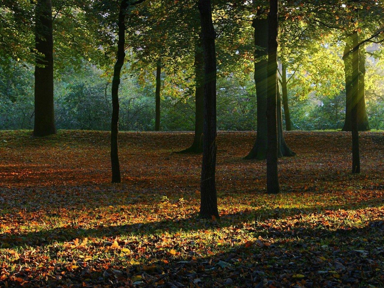 природа деревья листья лес nature trees leaves forest загрузить
