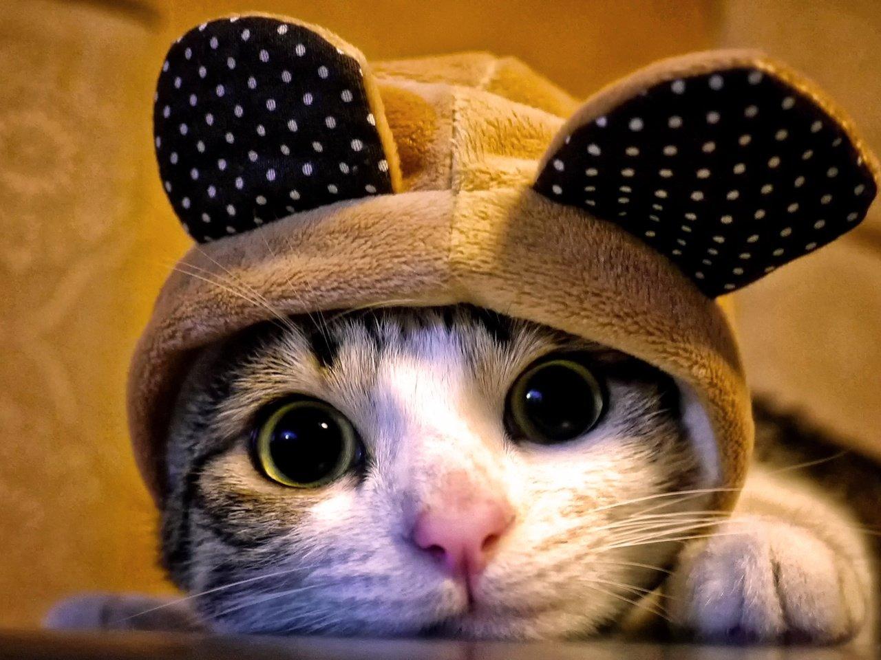 Открытка новым, смешные картинки вк с животными