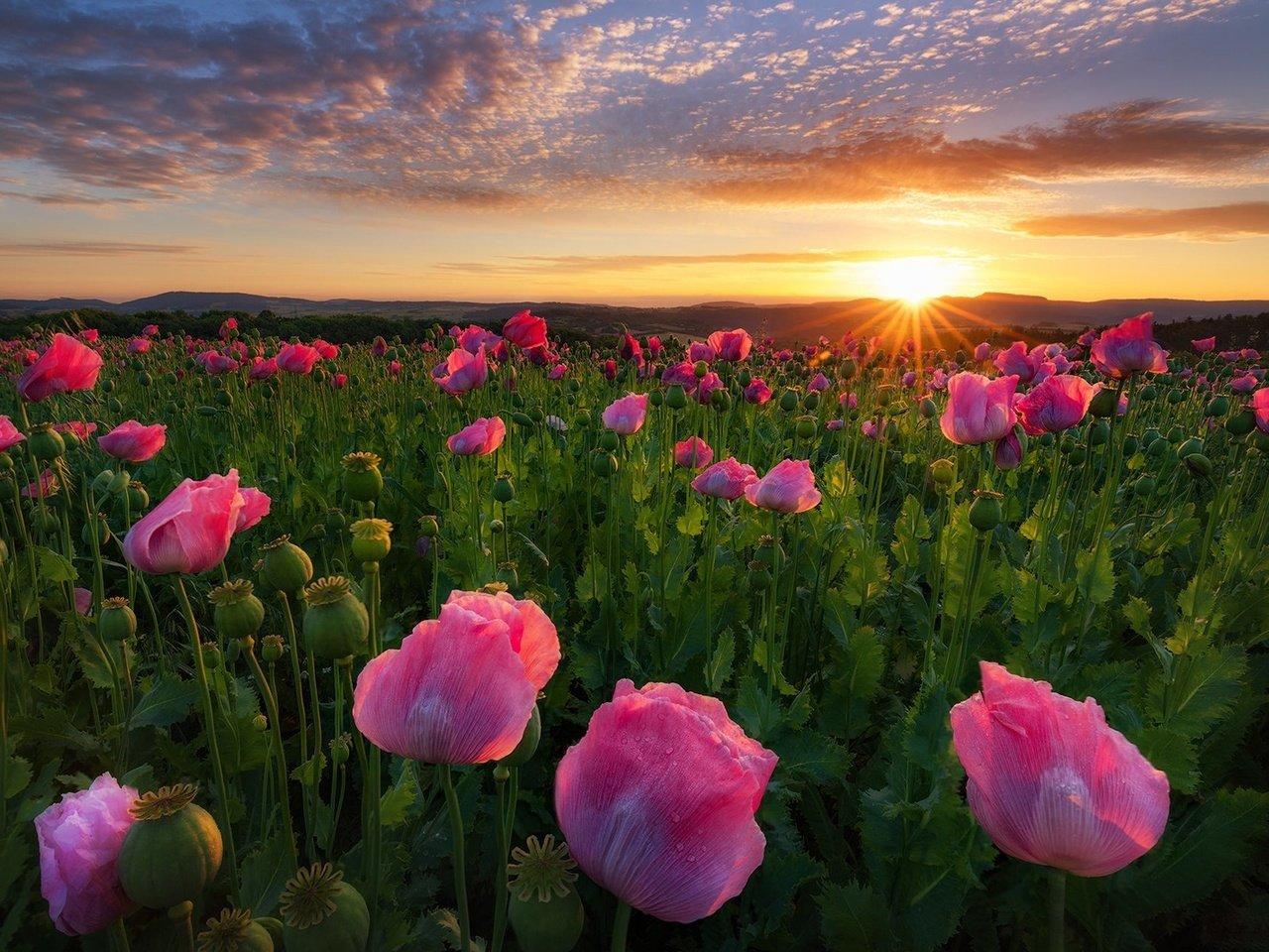 красивые фото цветочных полей на рассвете земельном