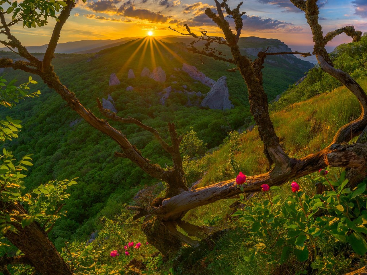картинки хорошего утра природа запрещают крутить обруч