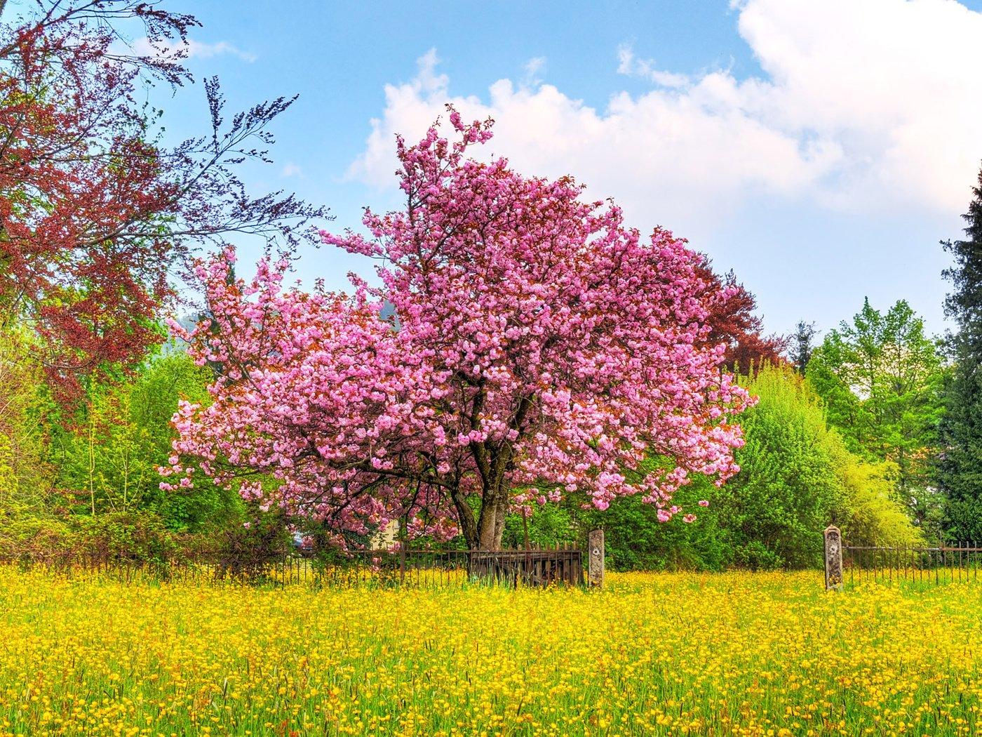 Картинки растения деревья цветы