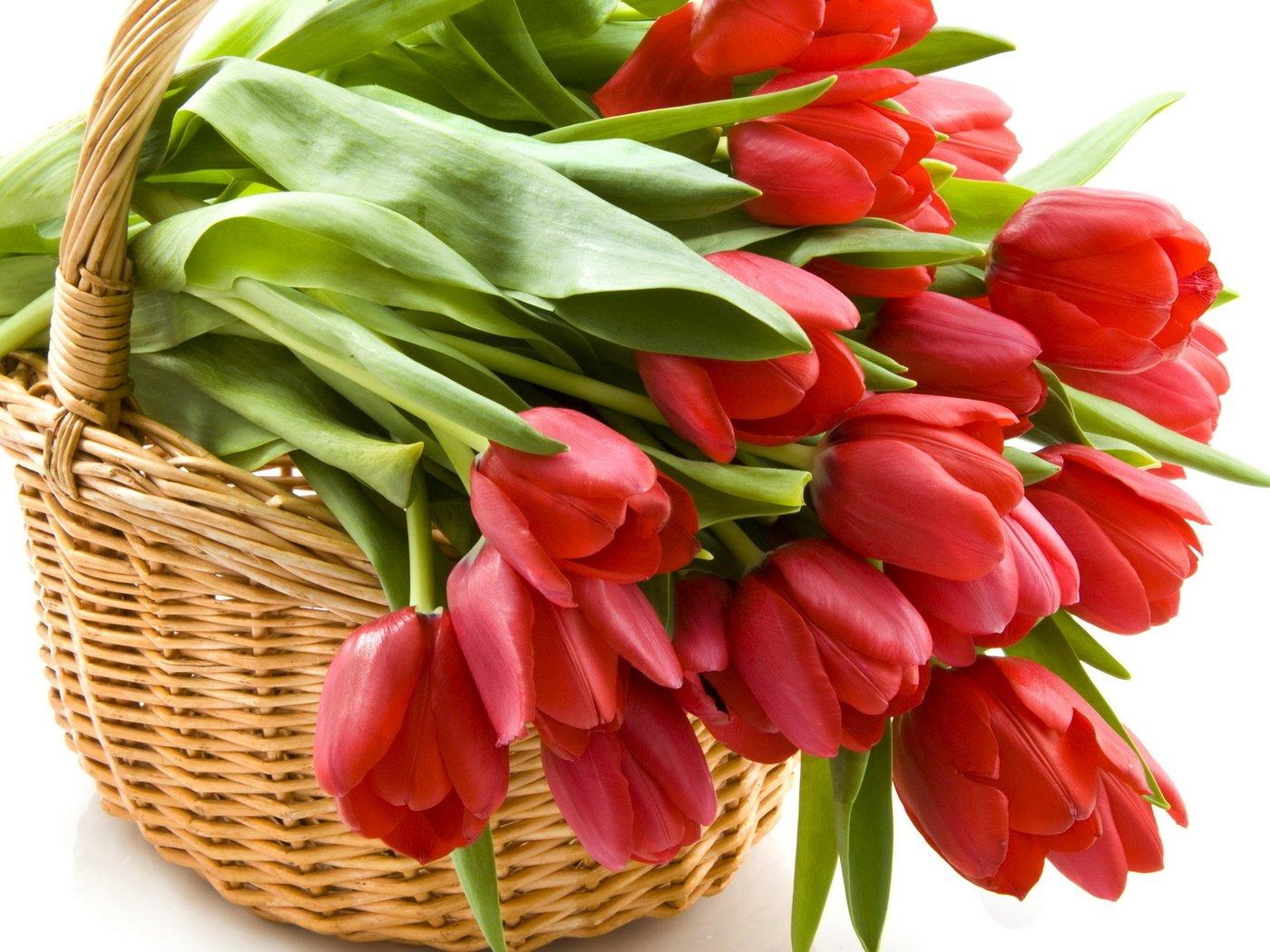 Тюльпаны красивая открытка