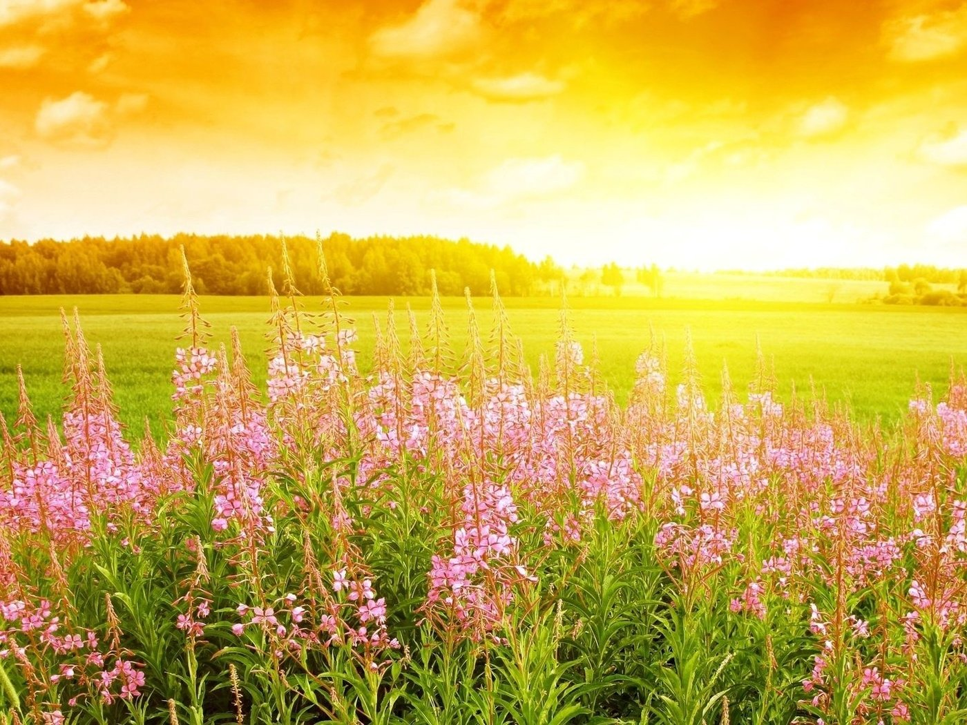 Оригинальные дню, картинки поле цветы солнце