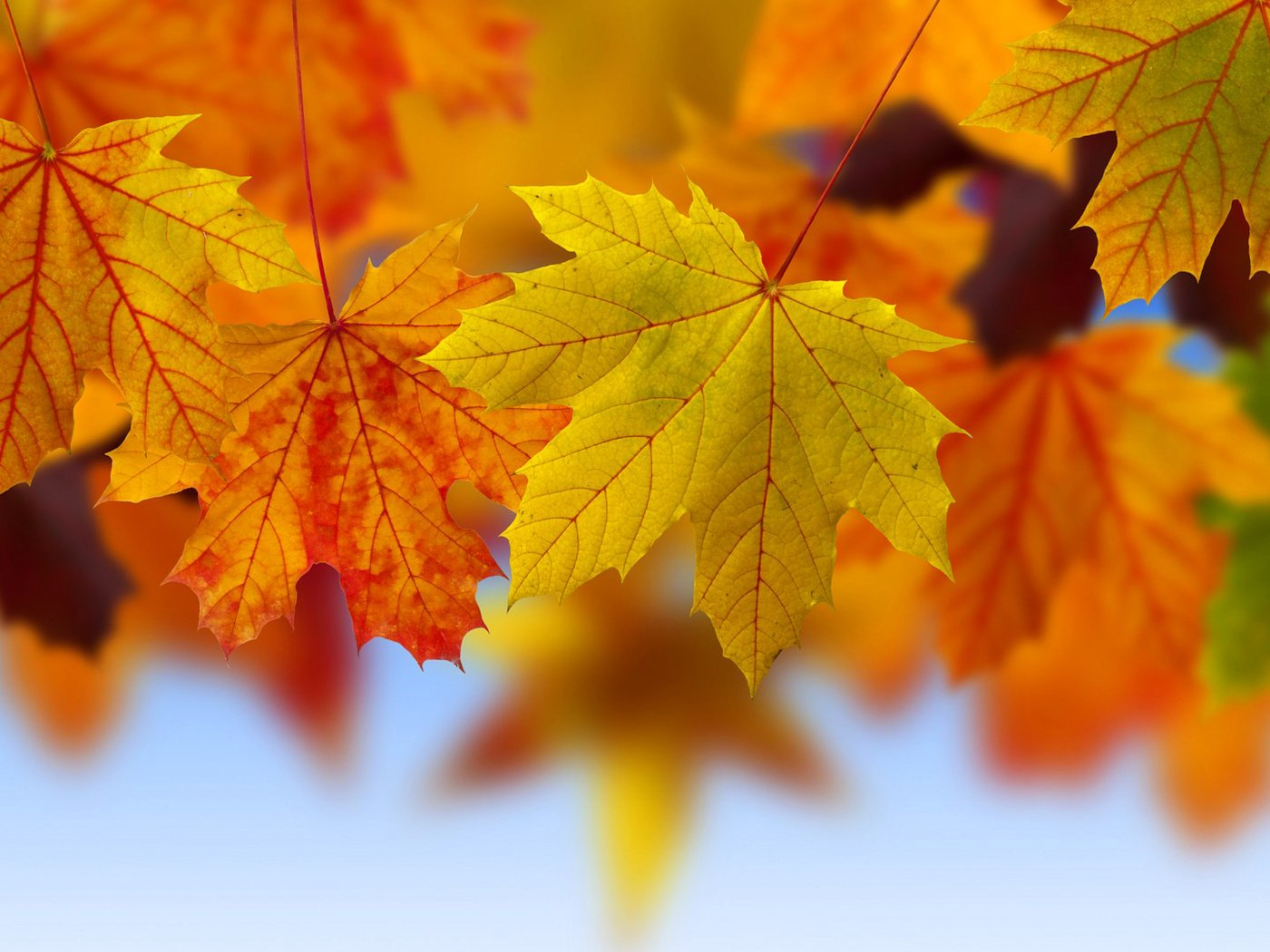 Сердце, открытки с осенними листьями