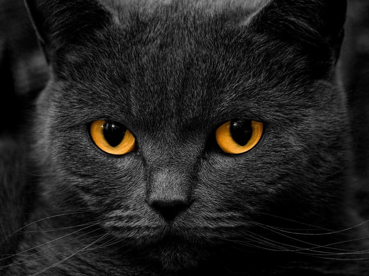 обои на рабочий стол черная кошка с зелеными глазами № 174243  скачать