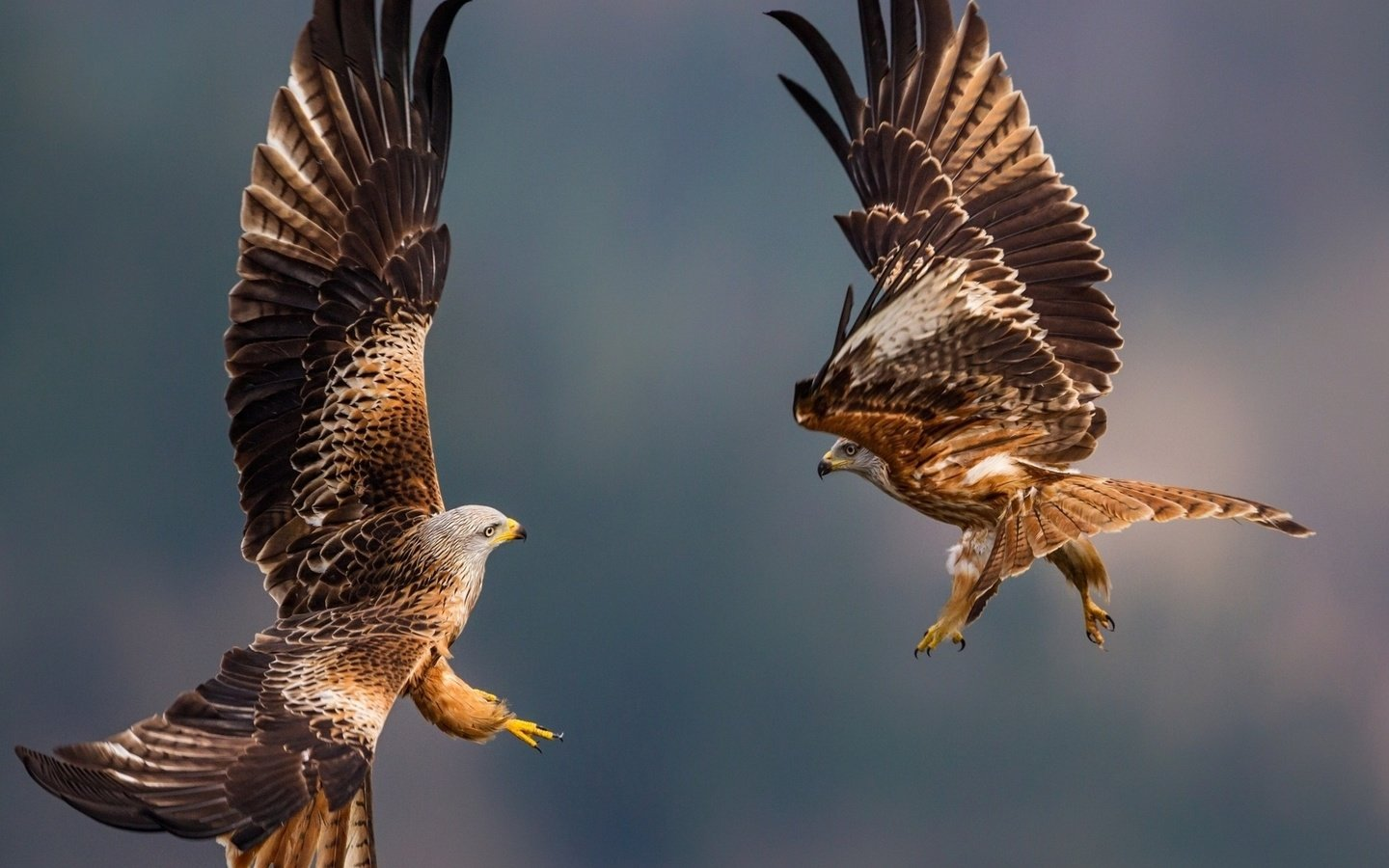 National Geographic Complete Birds of the World: National National geographic eagle pictures