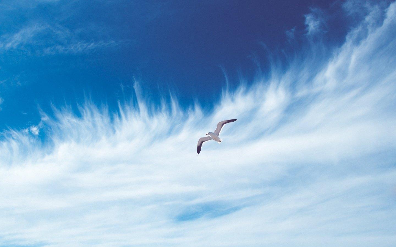 Открытки птицы в небе
