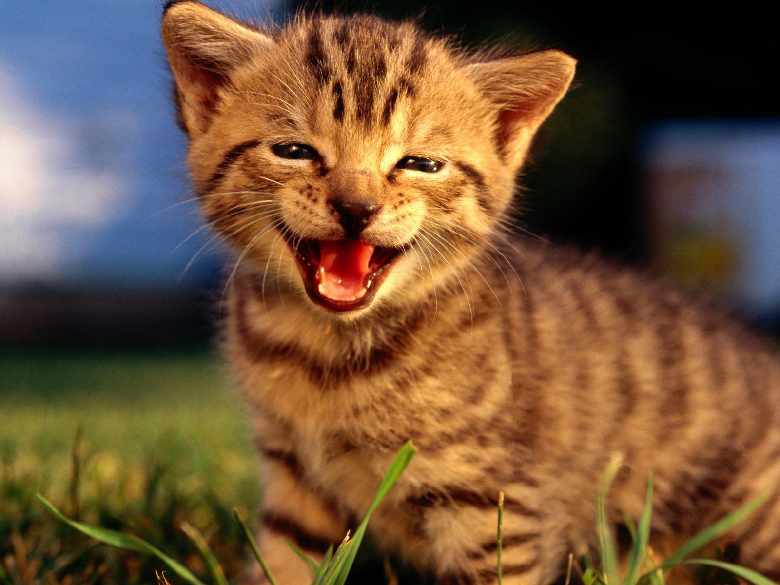 Смешные картинки с улыбками животных, загадочная женщина