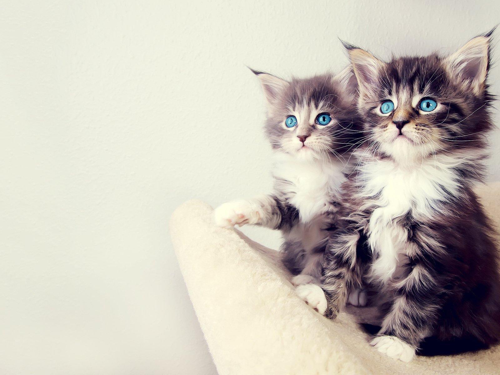 Картинки милые котята смешные, страшные рисунки схемы