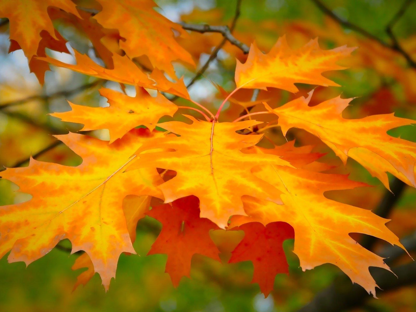 основной картинки осень листья большие наклейте