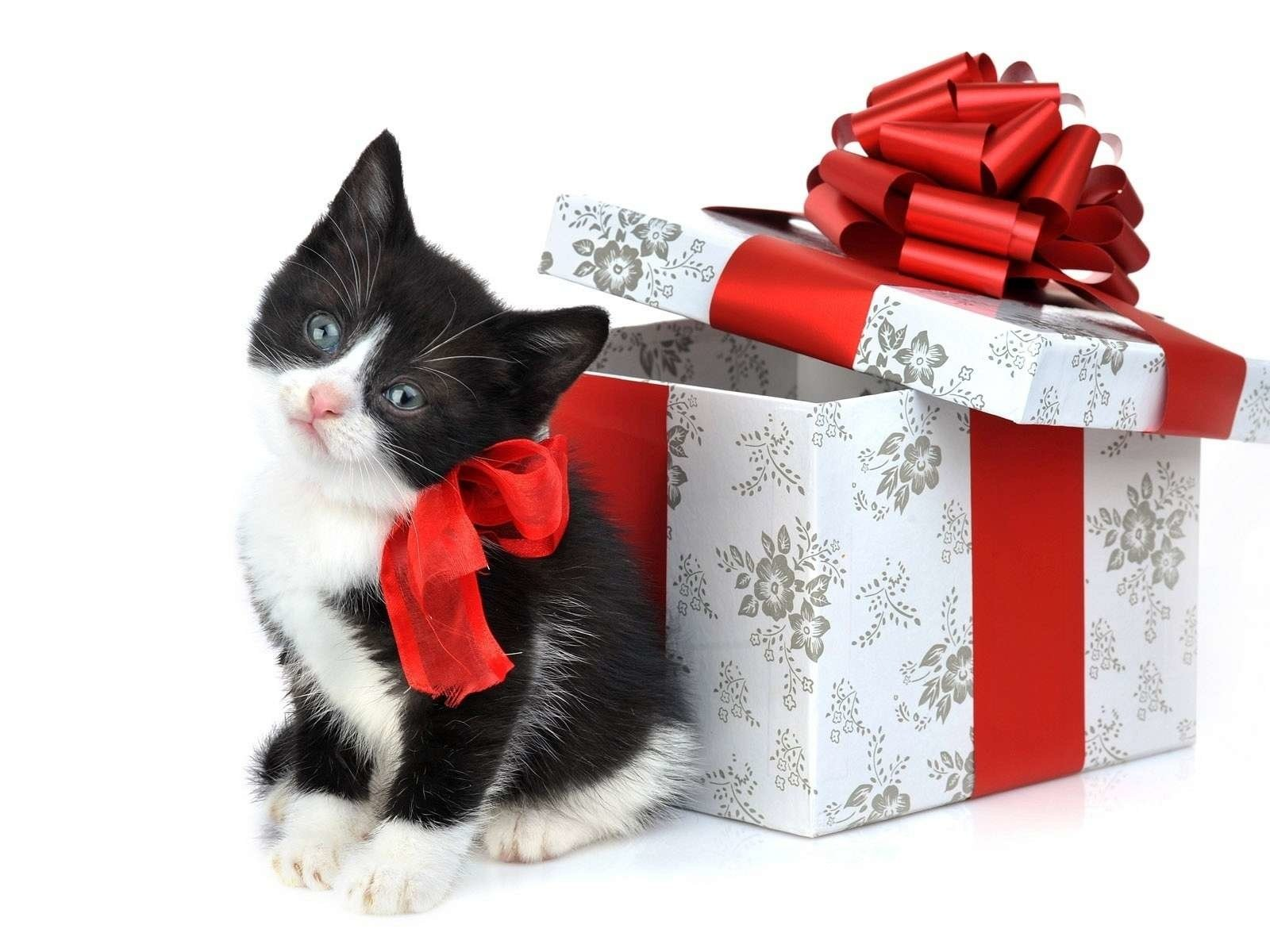 Поздравления через интернет с днем рождения с подарком, открытки любимой