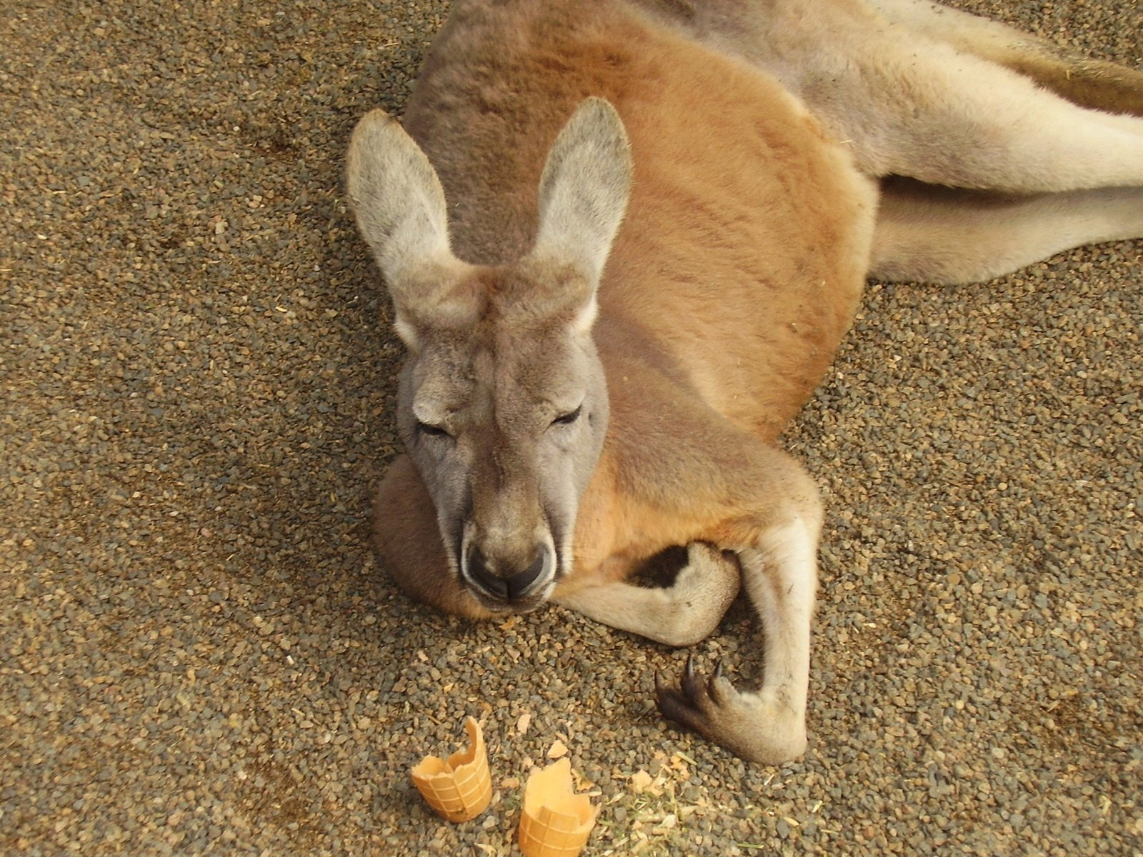 Секс с кенгуру онлайн, Кенгуру секс. Смотреть на сайте online 30 фотография