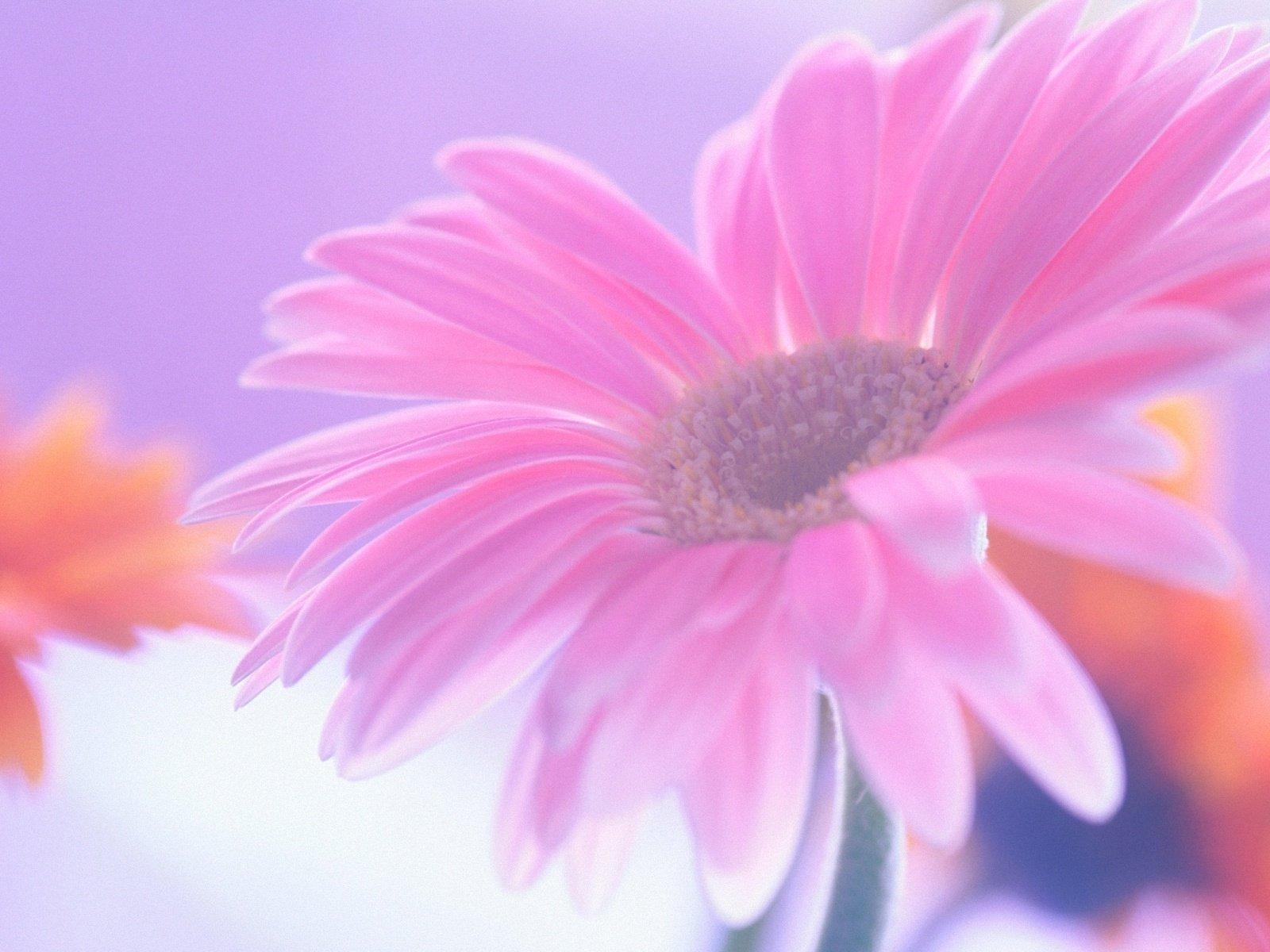 Открытки с цветами на день матери, днем рождения