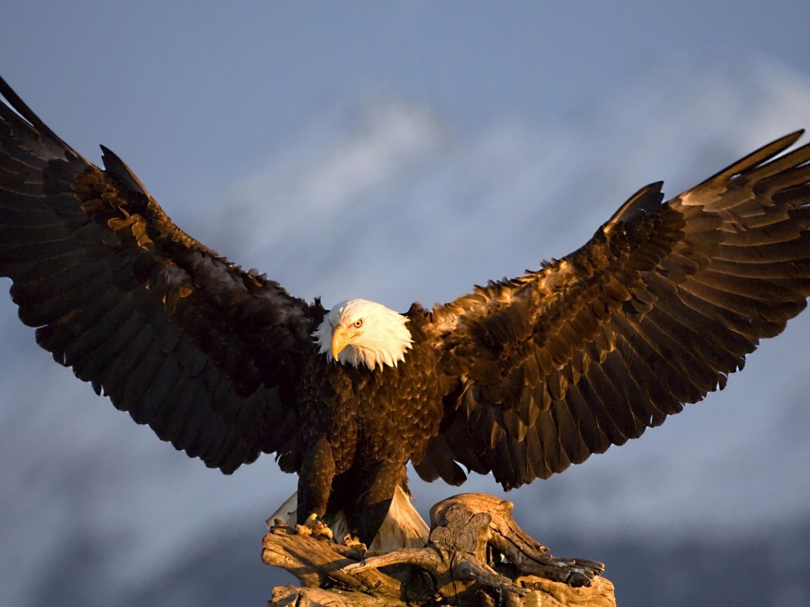 фото орла на телефон крыша