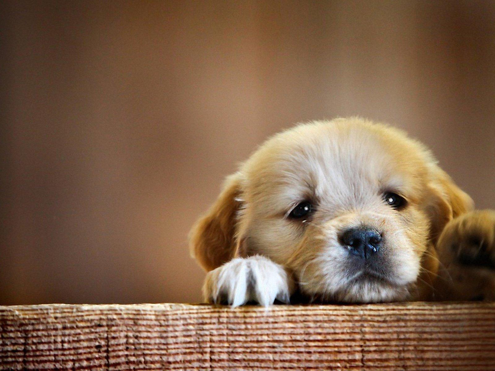 Милые щенята открытка