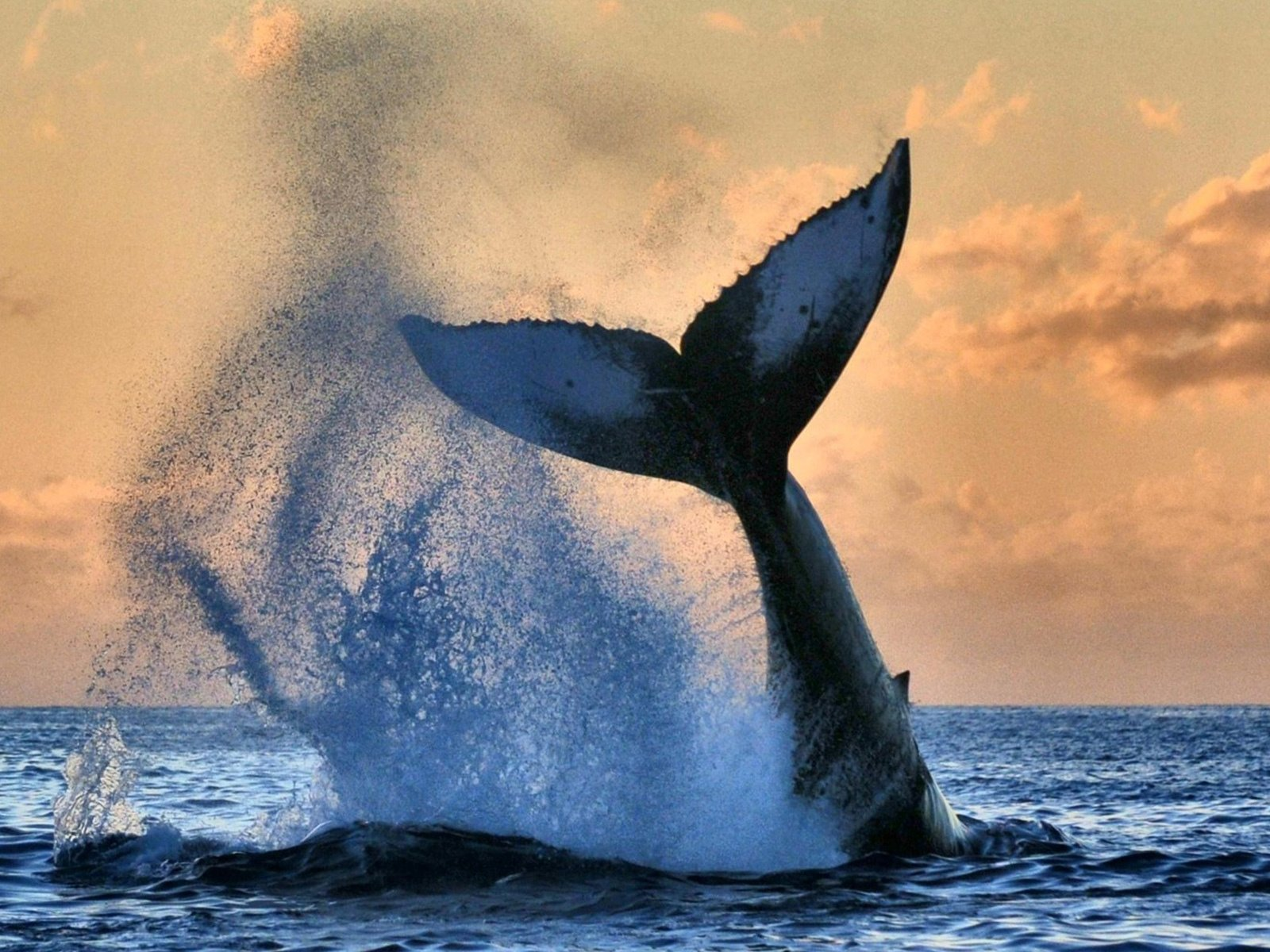 хвост кита картинки когда