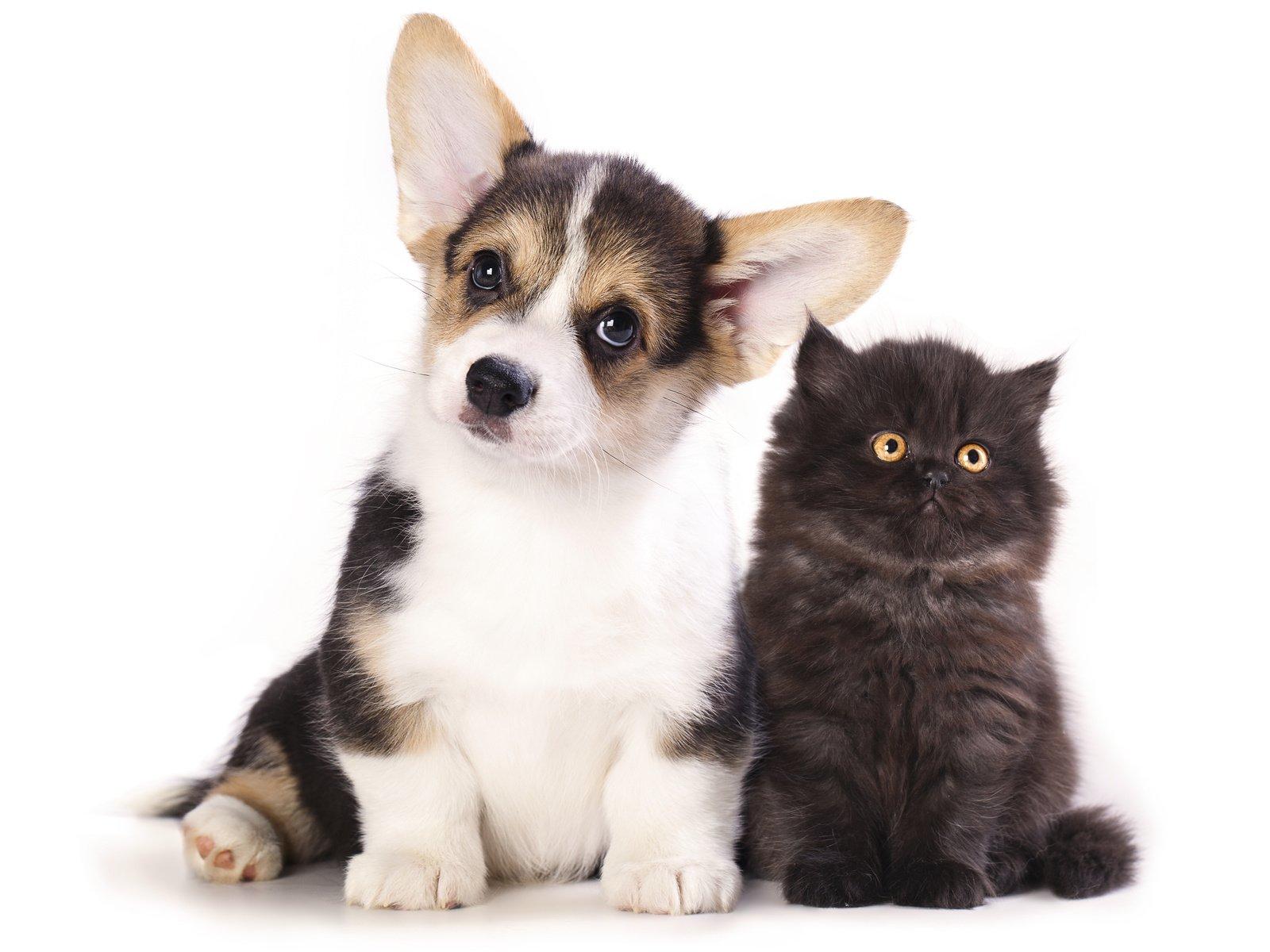 Прикольные картинки котят и щенков, рождеством видео