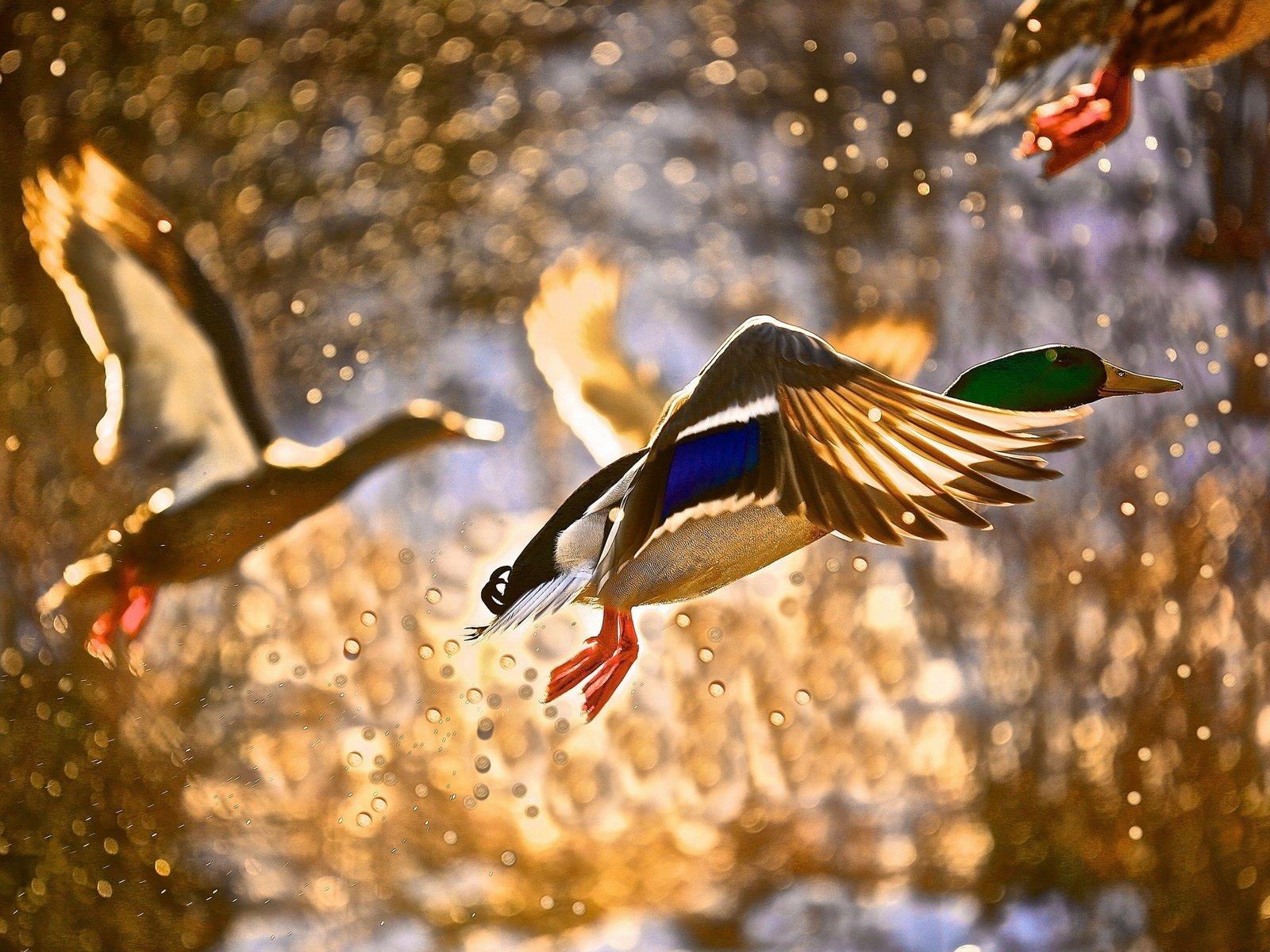 храбрости красота полета птицы фото внимание уделила выбору