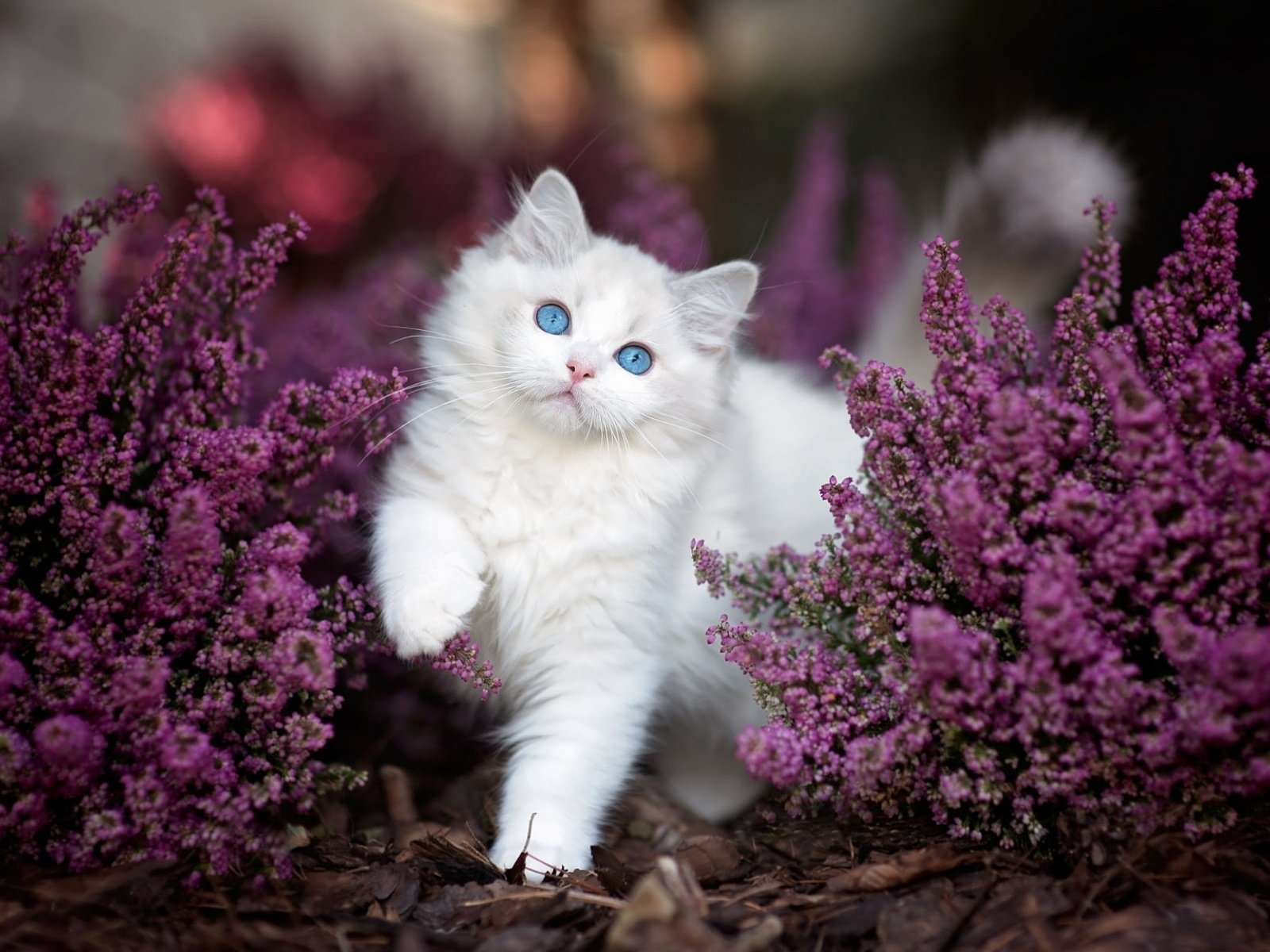 Открытки красивые коты